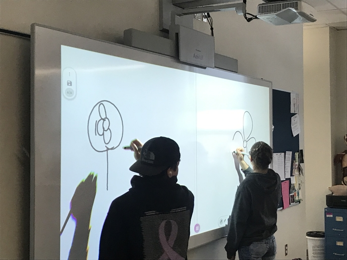A&P Pictionary